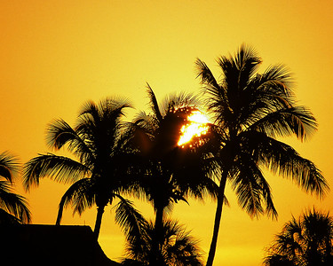 Sunrise behind palms in Sanibel Florida