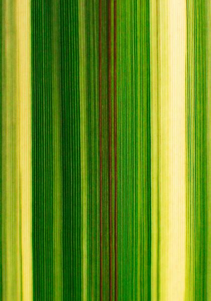 Flax 3