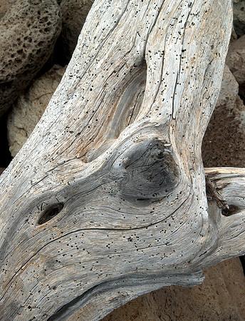 Driftwood - Hawaii