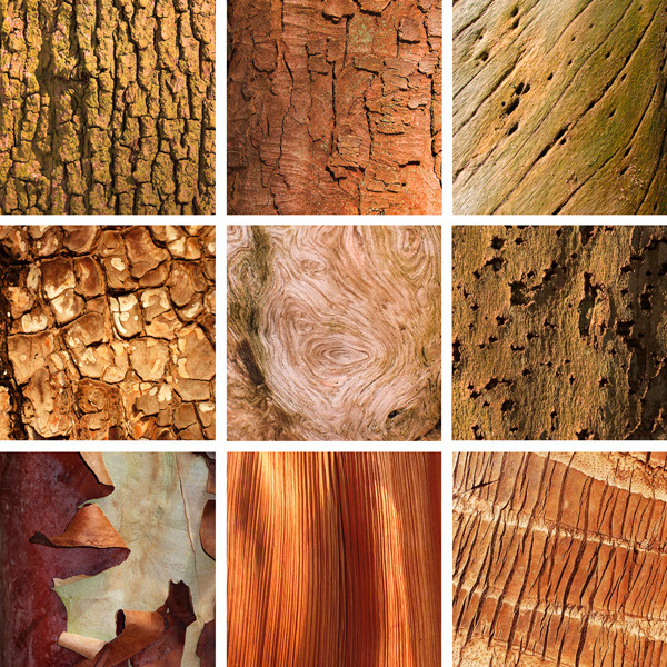 Collection 1 - Bark
