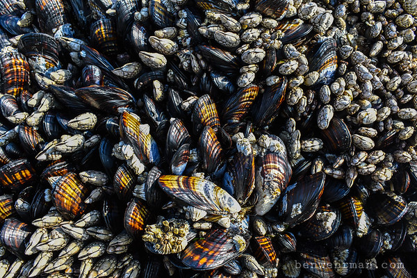 Mussels Texture