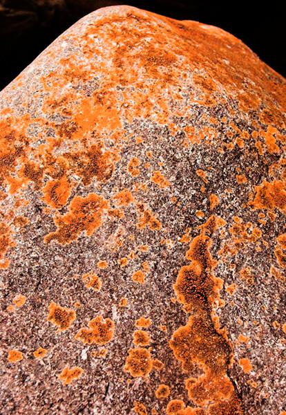 Lichen Rock 2