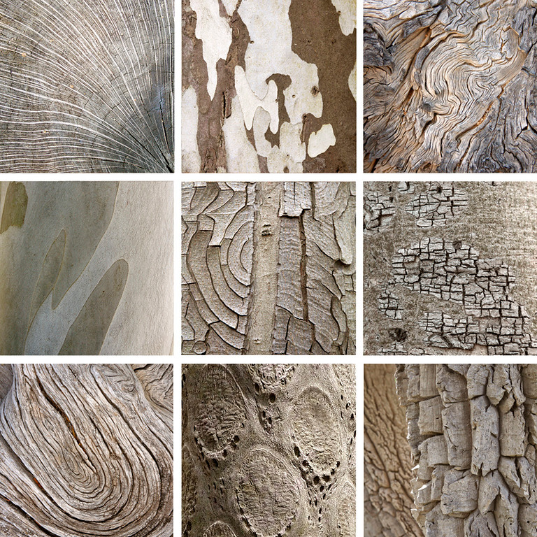 Collection 7 - Bark