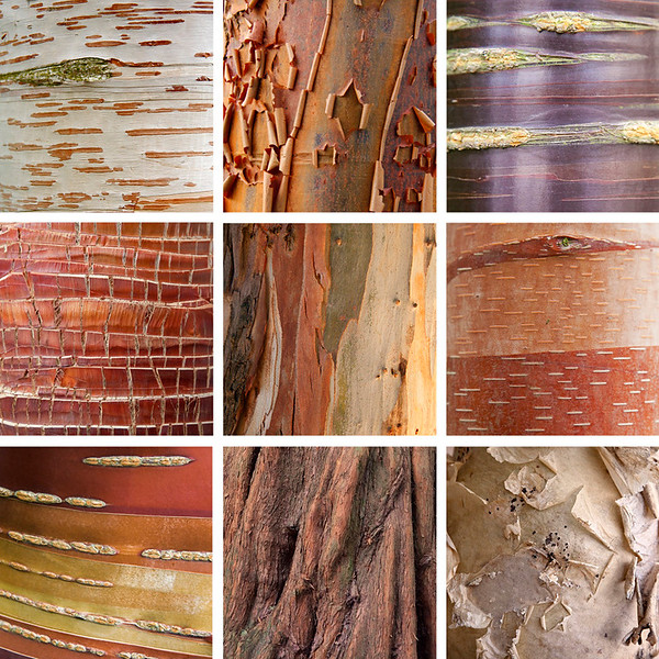 Collection 8 - Bark