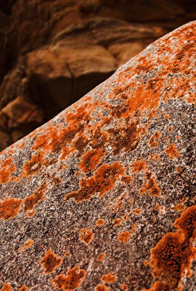 Lichen Rock 4