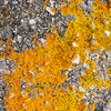 Granite with lichen, Granite Island, SA