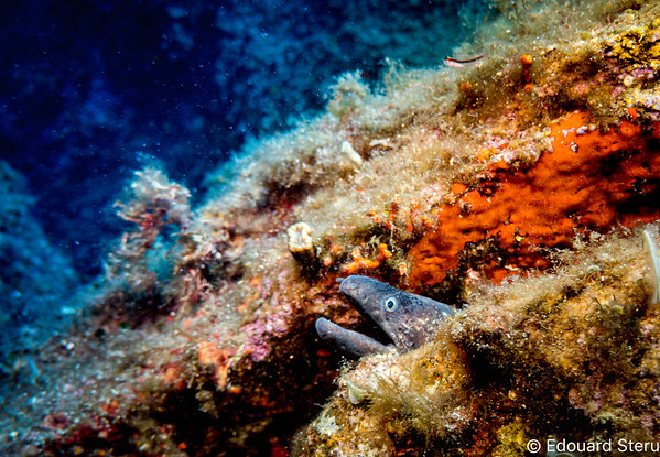 Corse underwater 2019