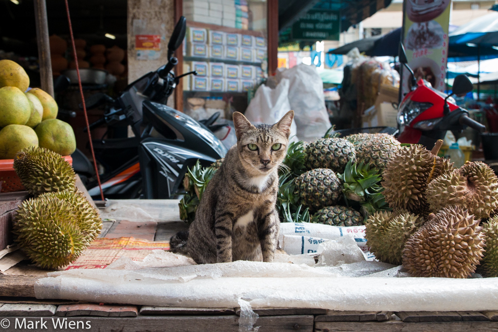 durian protector