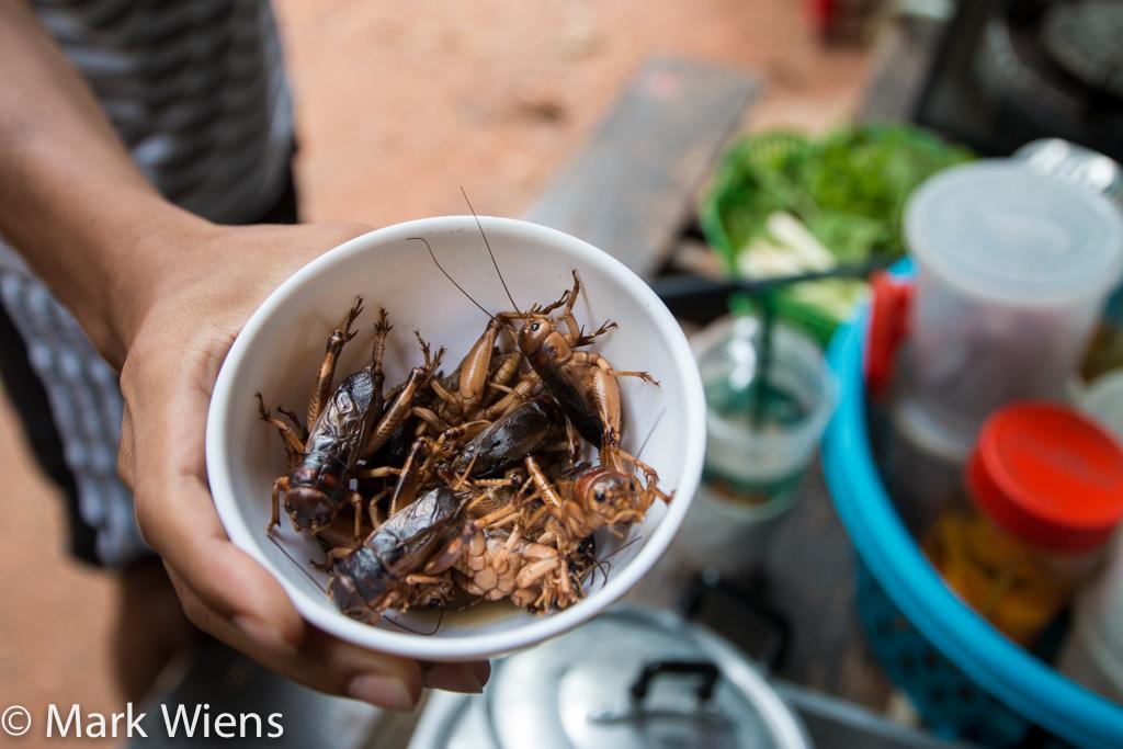 จิ้งหรีด giant crickets