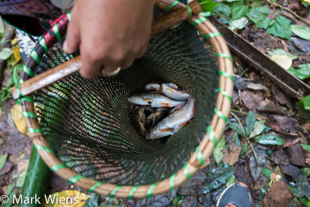 Jungle fishing in Chiang Rai