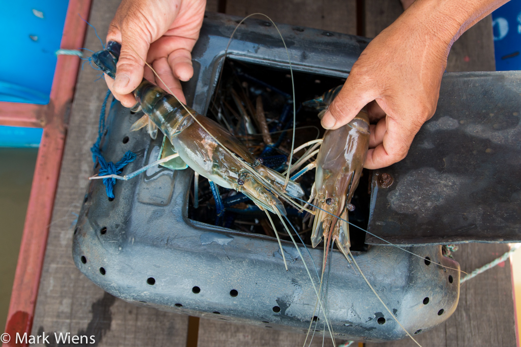 Ayutthaya prawns