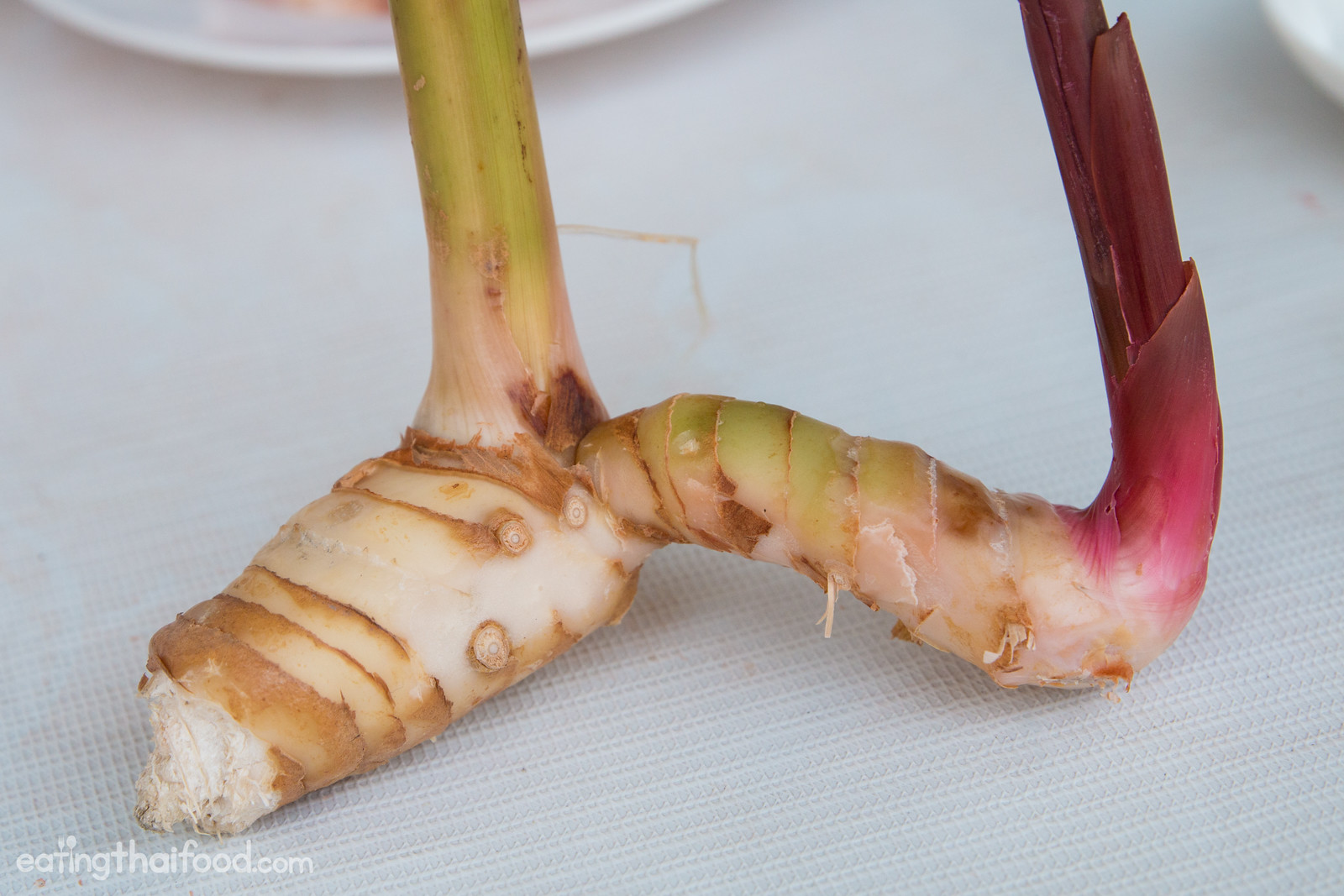 what is galangal