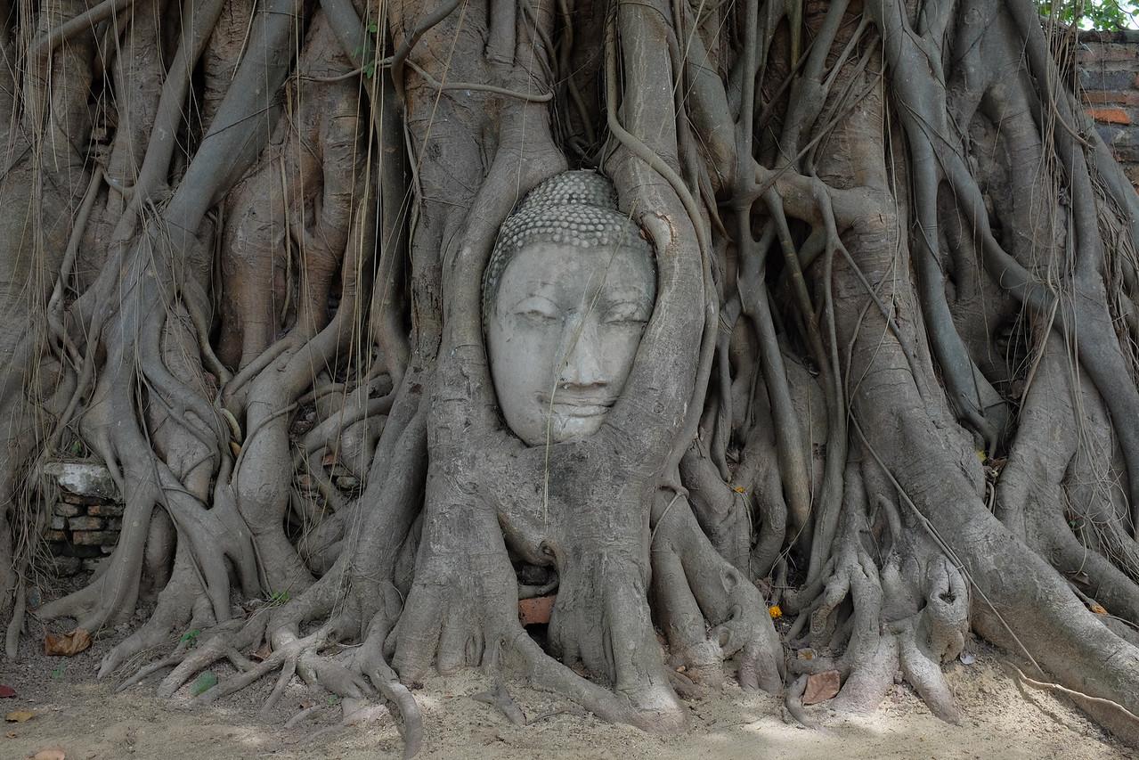 Famous Buddha head
