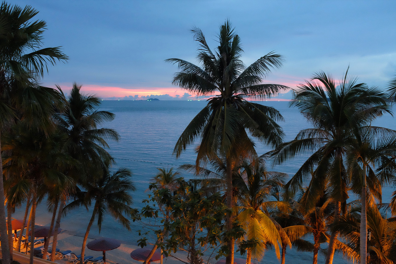 Sunset and lit palms