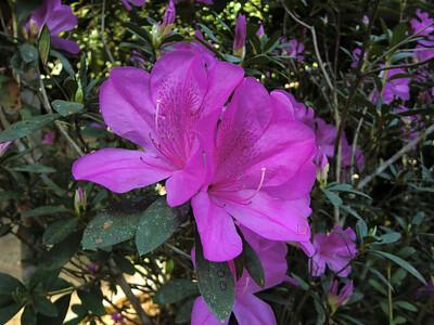 Flower detail 10
