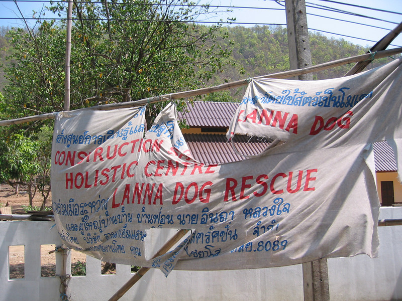 Lanna Dog Rescue 6