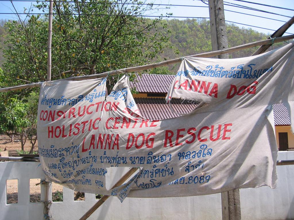 Lanna Dog Rescue 6