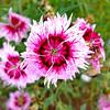 Flower detail 2