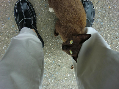 Friendly cat and new shoes