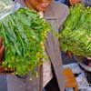 Bringing greens