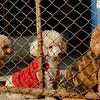 Doggie prisoners'