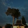 Sunday market tree