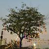 Night market tree