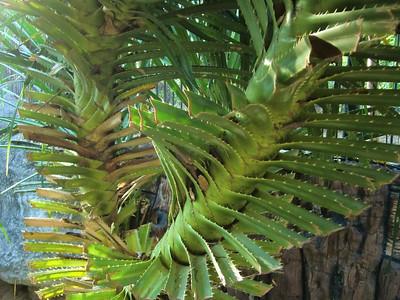 Twisty plant