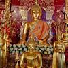Radiant Buddhas