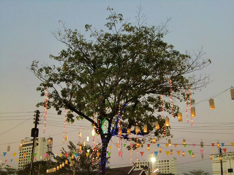 Night market tree