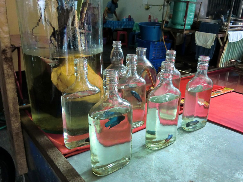 Bottled fishes