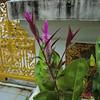 Temple flower