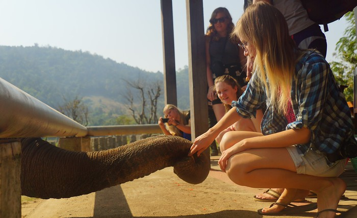 Feeding elephants at the Elephant Nature Park in Thailand.