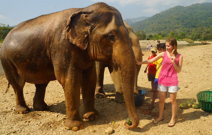 Coming face to face with an Asian elephant.