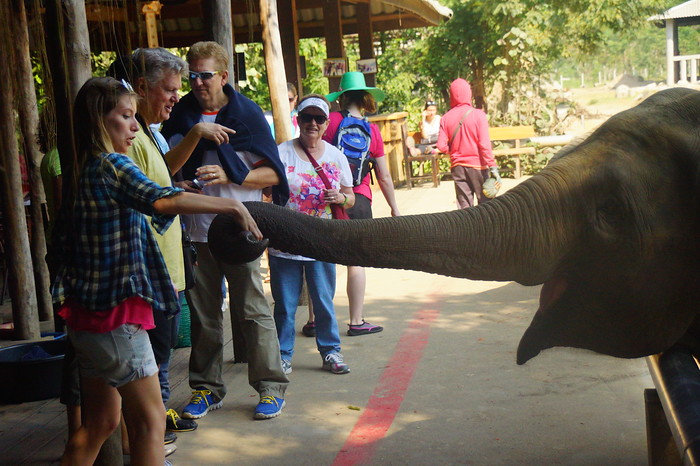 Feeding elephants at the Elephant Nature Reserve north of Chiang Mai, Thailand.
