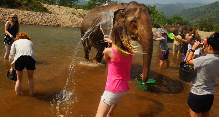 Bathing elephants at the Elephant Nature Park.