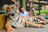 Matt Mills at Tiger Kingdom Maerim, Chaing Mai, Thailand, 26 March 2012. (The tiger wrangler took this photo).