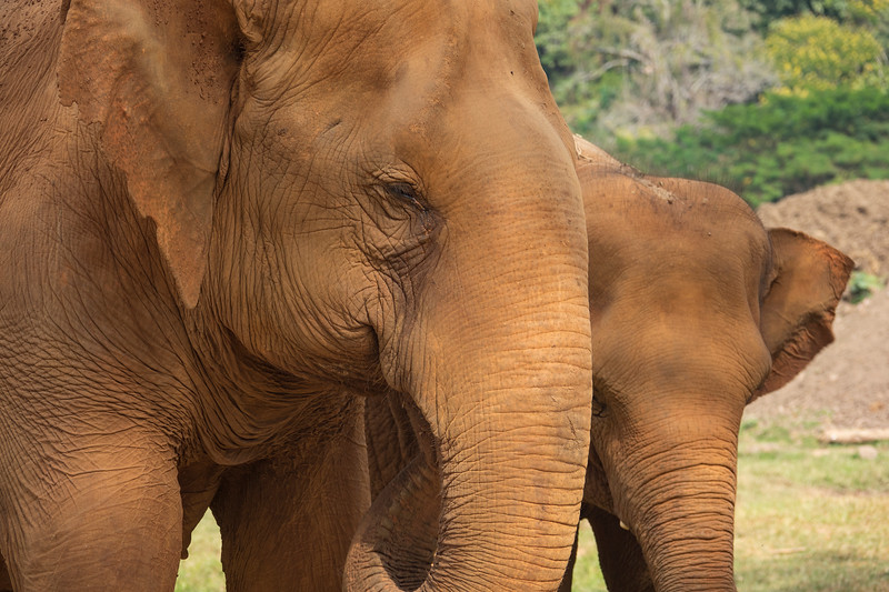 Elephant mother and young one