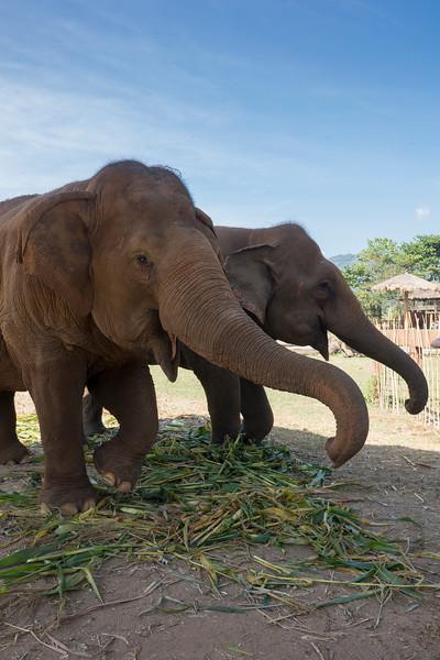 Hungry Elephants