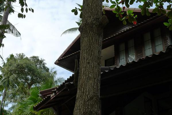2011 SEPT 29 Koh Tao