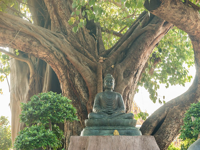 Buddha Sitting Under Tree