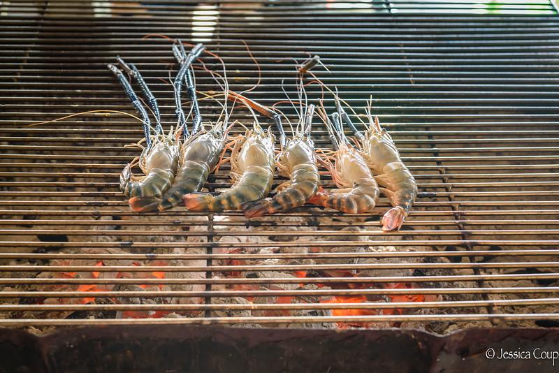 Shrimps Line Up