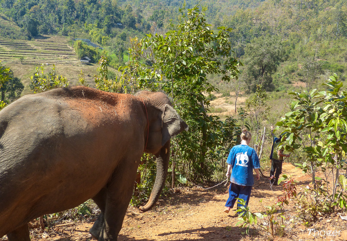 walking with elephants through the Mae Wang valley, Chiang Mai
