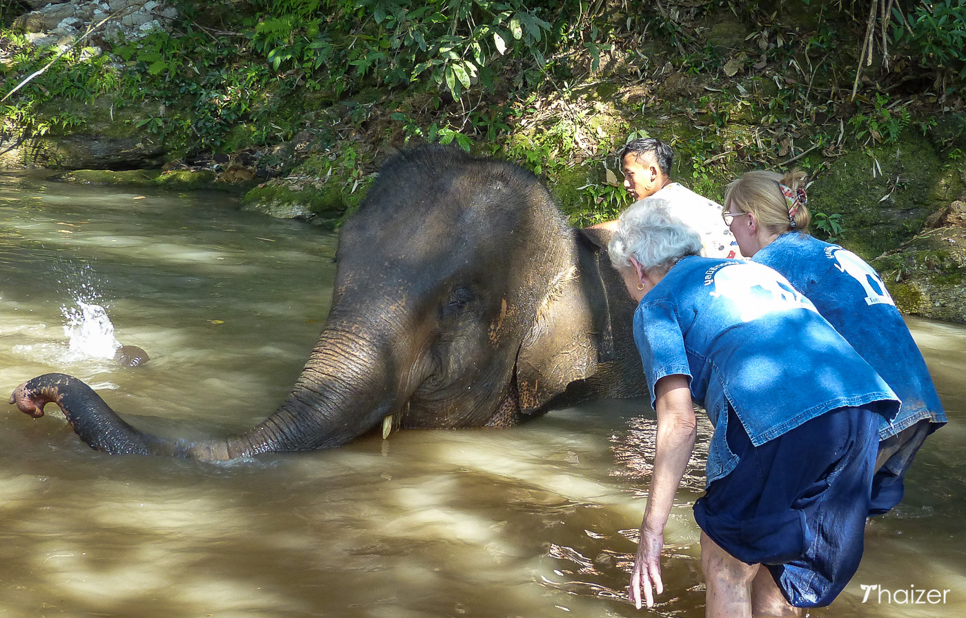 bathing elephants in Chiang Mai with Tong Bai Elephant Tours