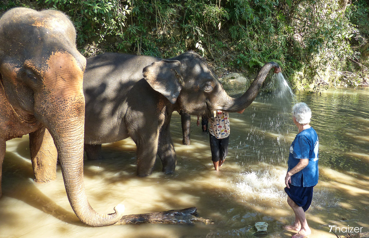 elephant shower time at Tong Bai Foundation, north Thailand