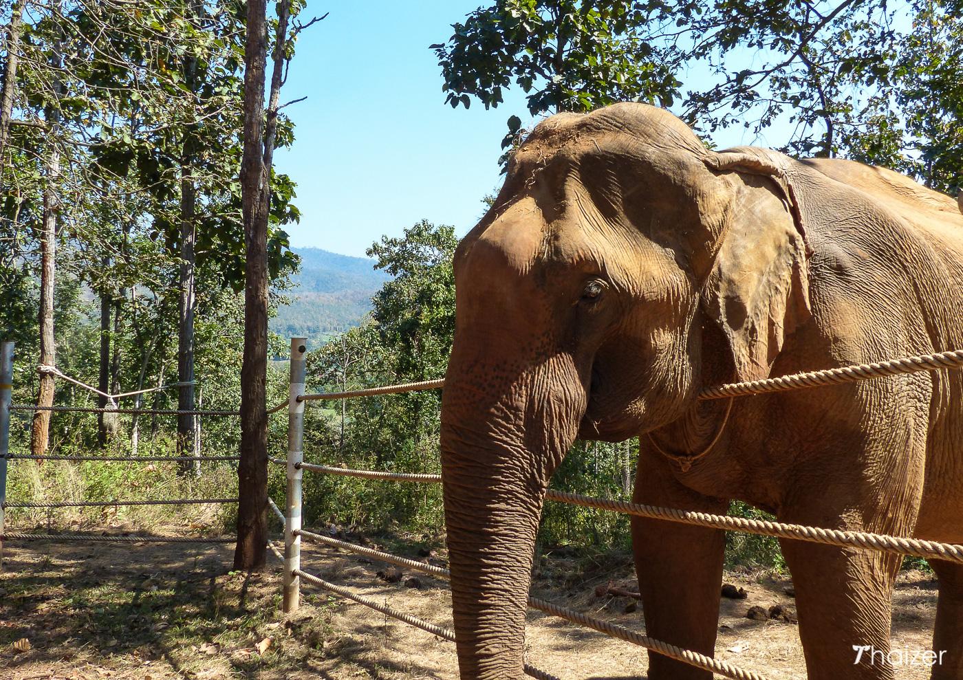 Tong Bai Elephant Tours, Chiang Mai