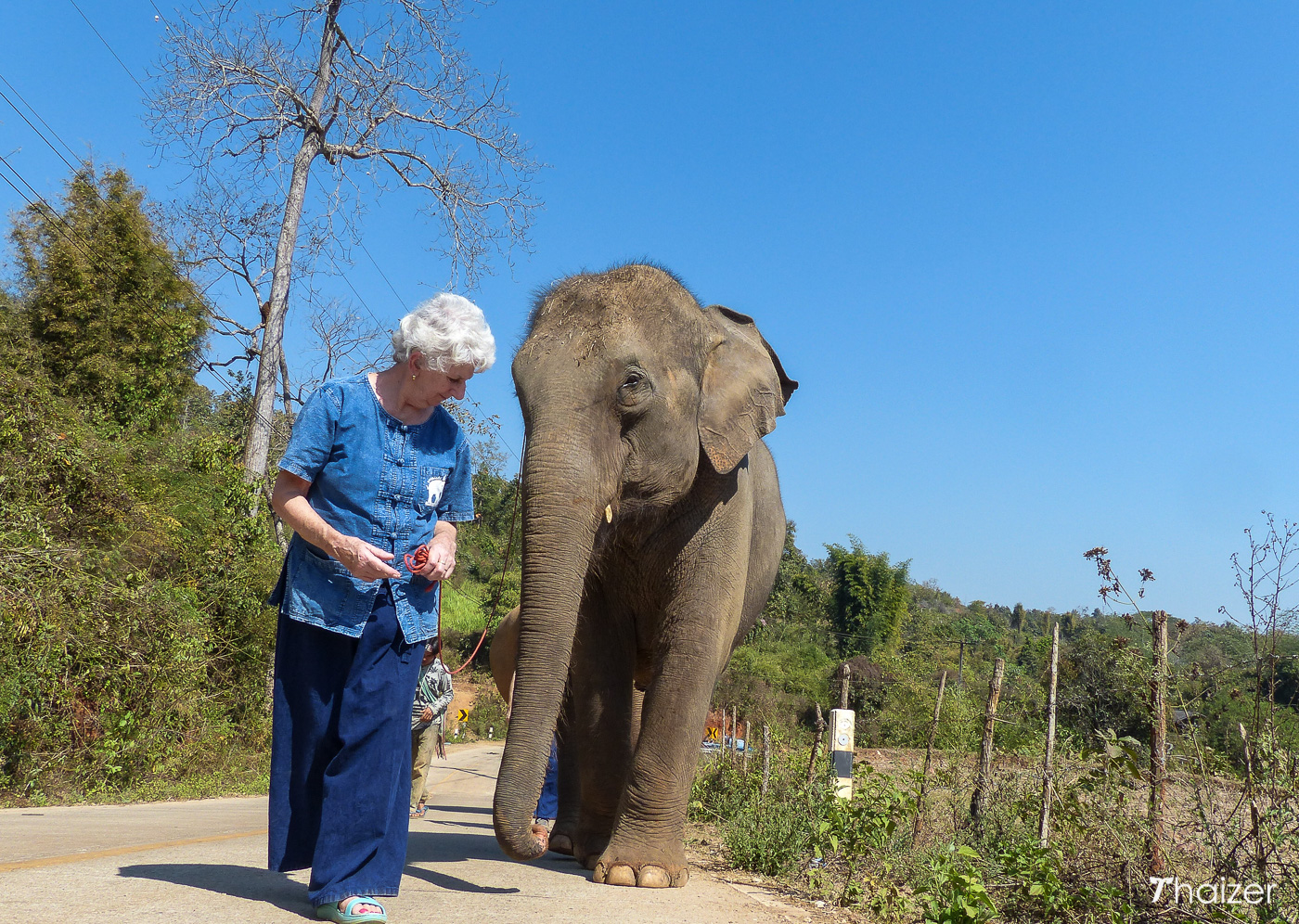 walking with elephants and no riding in Chiang Mai