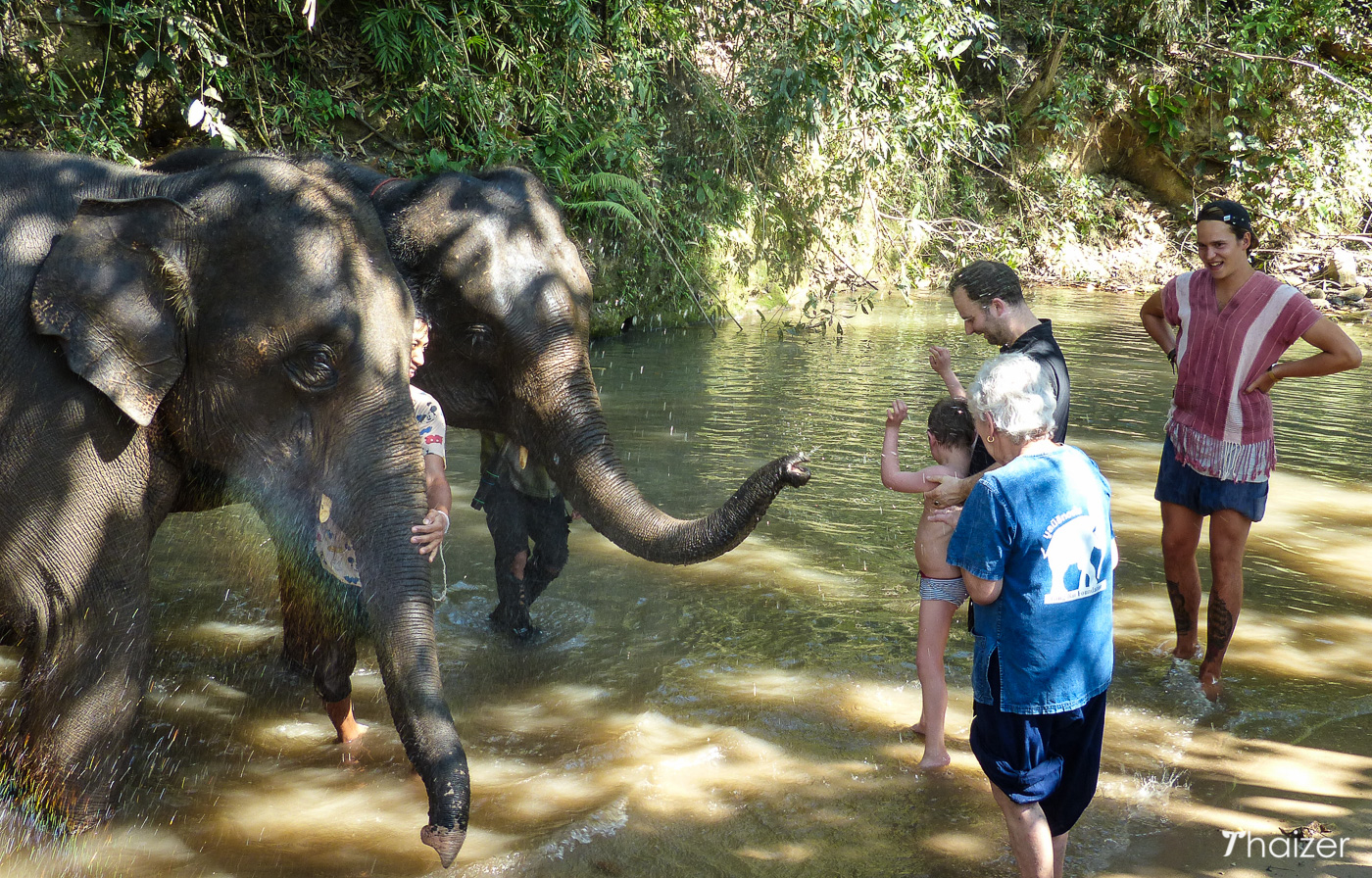 bath time with the eles at Tong Bai Elephant ours