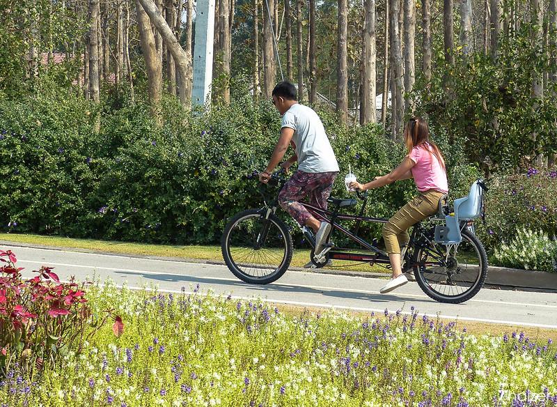 cycling at Singha Park, Chiang Rai