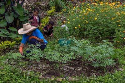 Gardening in Doi Pui Village